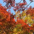 京都2007.天竜寺2