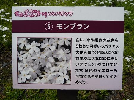 100518-富士芝桜まつり-28