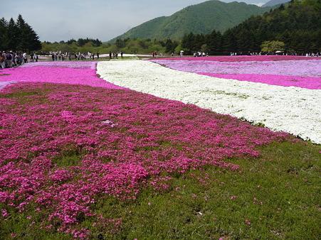 100518-富士芝桜まつり-47