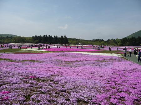 100518-富士芝桜まつり-46