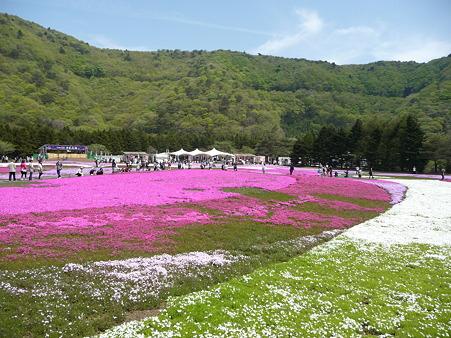 100518-富士芝桜まつり-54