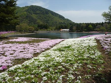 100518-富士芝桜まつり-55