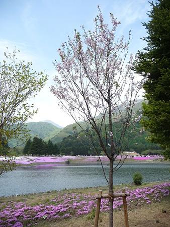 100518-富士芝桜まつり-62