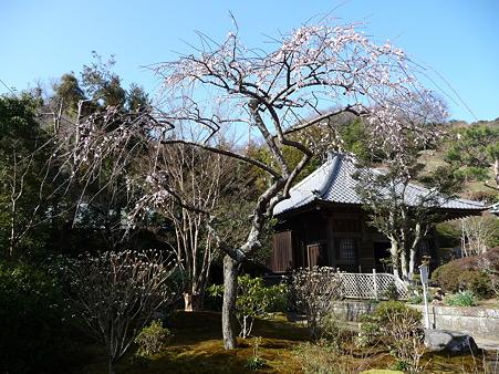 110225-海蔵寺 (17)