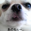 Photos: あのね★日村