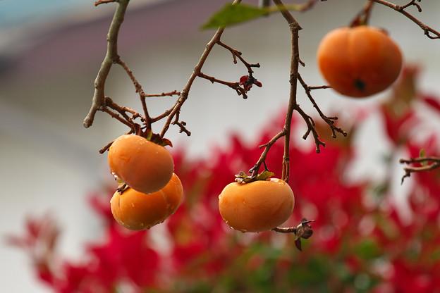 みのりの秋?