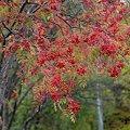 Photos: 北国の街路樹3