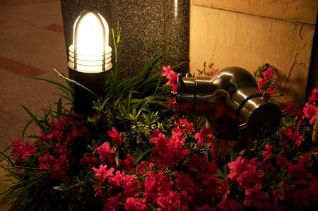花とライトと