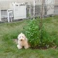 写真: 小庭でくーかい 1