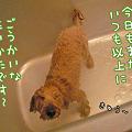 写真: 101031 くーかい of the day 2
