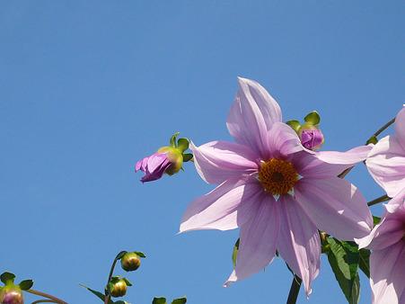 秋の青空に花