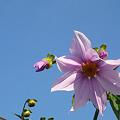 写真: 秋の青空に花