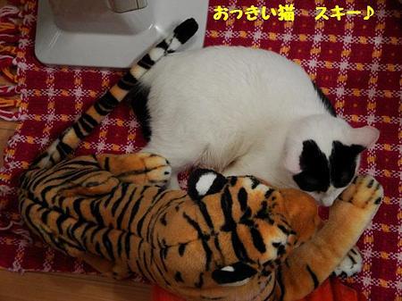はっちゃん&トラ子2