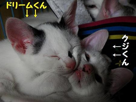 かわいい仔猫ズ