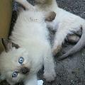 写真: 【子猫】本日4人の飼い主さ...