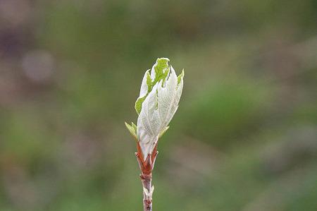 2010.04.04 和泉川 新緑