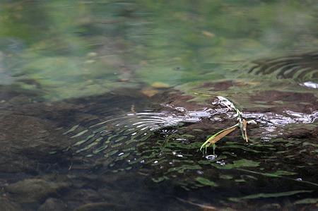 2010.04.13 和泉川 流れ