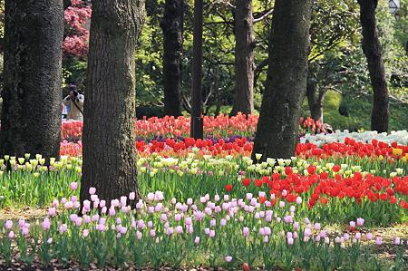 2010.04.19 横浜公園 チューリップ祭り