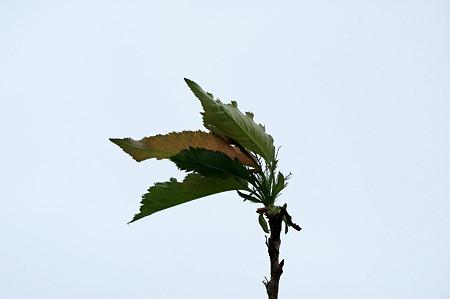2010.10.09 和泉川 秋風