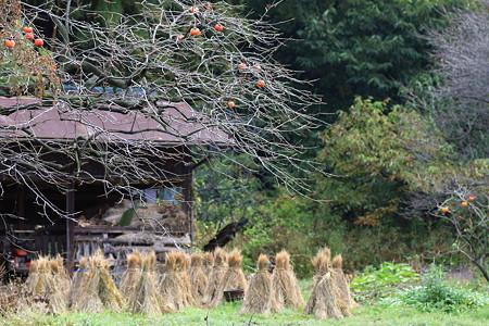 2010.11.18 和泉川 柿