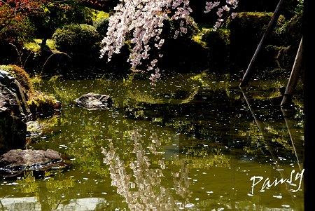 池に映して・・