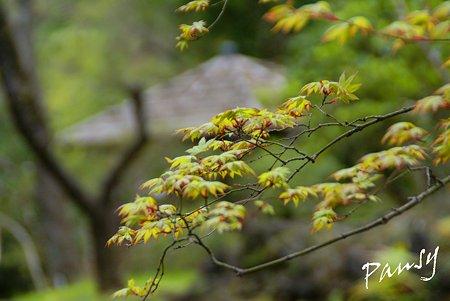若葉の季節・・