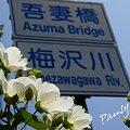 写真: 芙蓉の花と・・