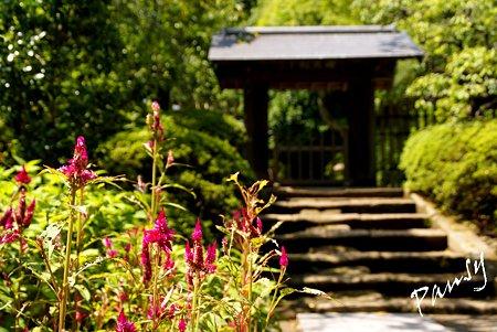 ケイトウの花と・・長月の浄智寺・・2