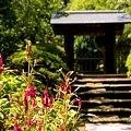 Photos: ケイトウの花と・・長月の浄智寺・・2