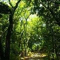 Photos: 緑の径・・