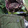 Photos: 各種ベッド