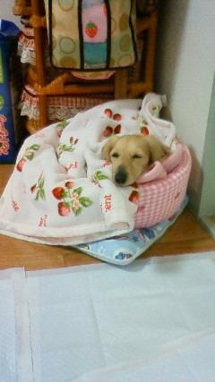 小さなお姉ちゃんが、寒くないように毛布を掛けてくれてます^^