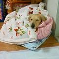 Photos: 小さなお姉ちゃんが、寒くないように毛布を掛けてくれてます^^