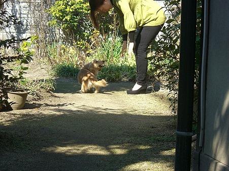 おばーちゃん家のお庭で遊んだよ
