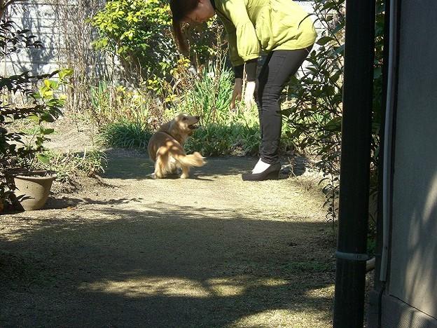 Photos: おばーちゃん家のお庭で遊んだよ