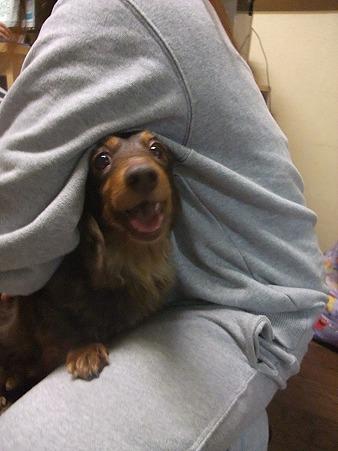 抱っこされるのが大好き!