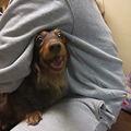 Photos: 抱っこされるのが大好き!