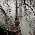 Photos: 桜の東京タワー!(100326)