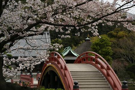 桜色、称名寺園内!(100403)