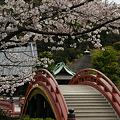 Photos: 桜色、称名寺園内!(100403)