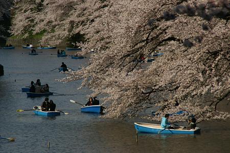 千鳥ヶ淵の桜花見!(100403)