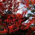 Photos: 紅葉の東福寺2!(101123)