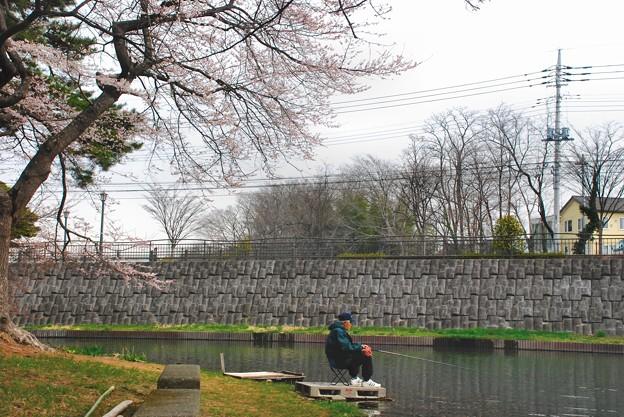 敷島公園・春の宴を独り楽しむ-5-D8-0331-18