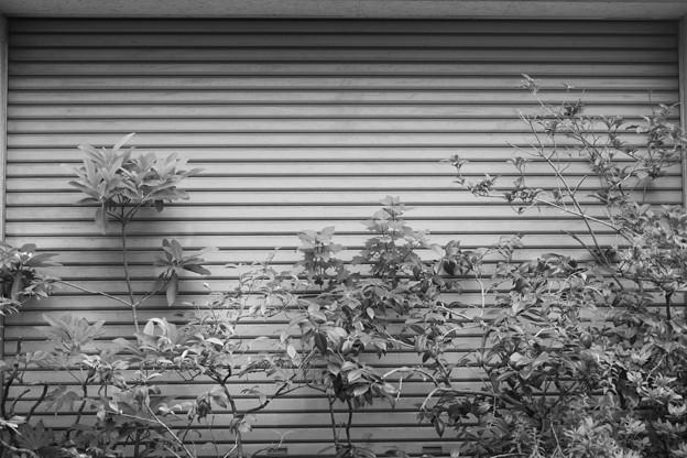 Photos: 2010-06-11-17.00.29