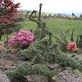 写真: 100511-35木の芸術1