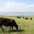 写真: 100512-116牧場