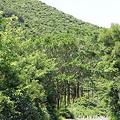 写真: 100514-108佐多岬の森