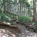 写真: 100721-67蝶ヶ岳への登山道