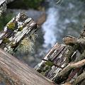 Photos: 110510-17男橋から川を見る