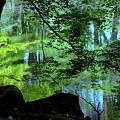 幻想の水辺